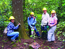 Hemlocks volunteers