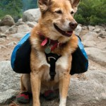Pet travel using a dog backpack
