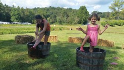 Annual Grape Harvest with the Crush Festival
