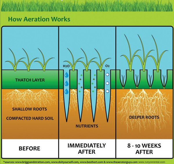 Aeration of Fescue Lawn