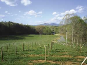 Wine Growers Association of Georgia