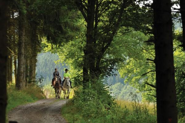 Blue Ridge Mountain Trail Rides at Hells Hollow