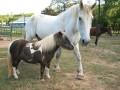 Equine Advocates of North Georgia - Equine Rescue March 2016